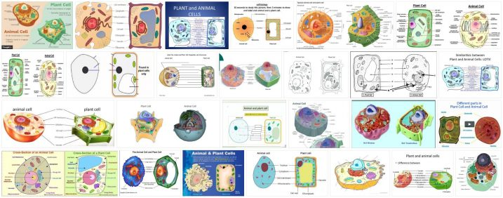 What are Animal and Plant Cells