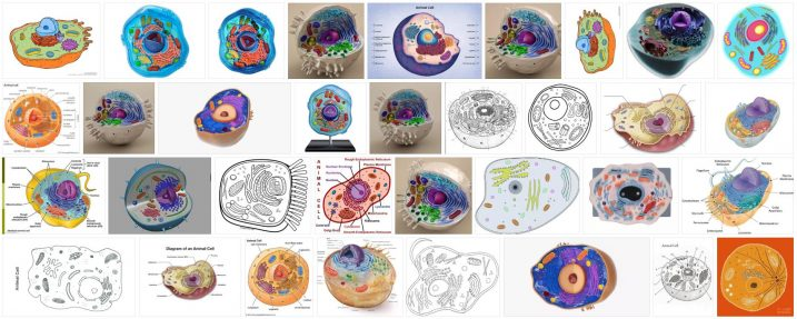 What is Animal Cell