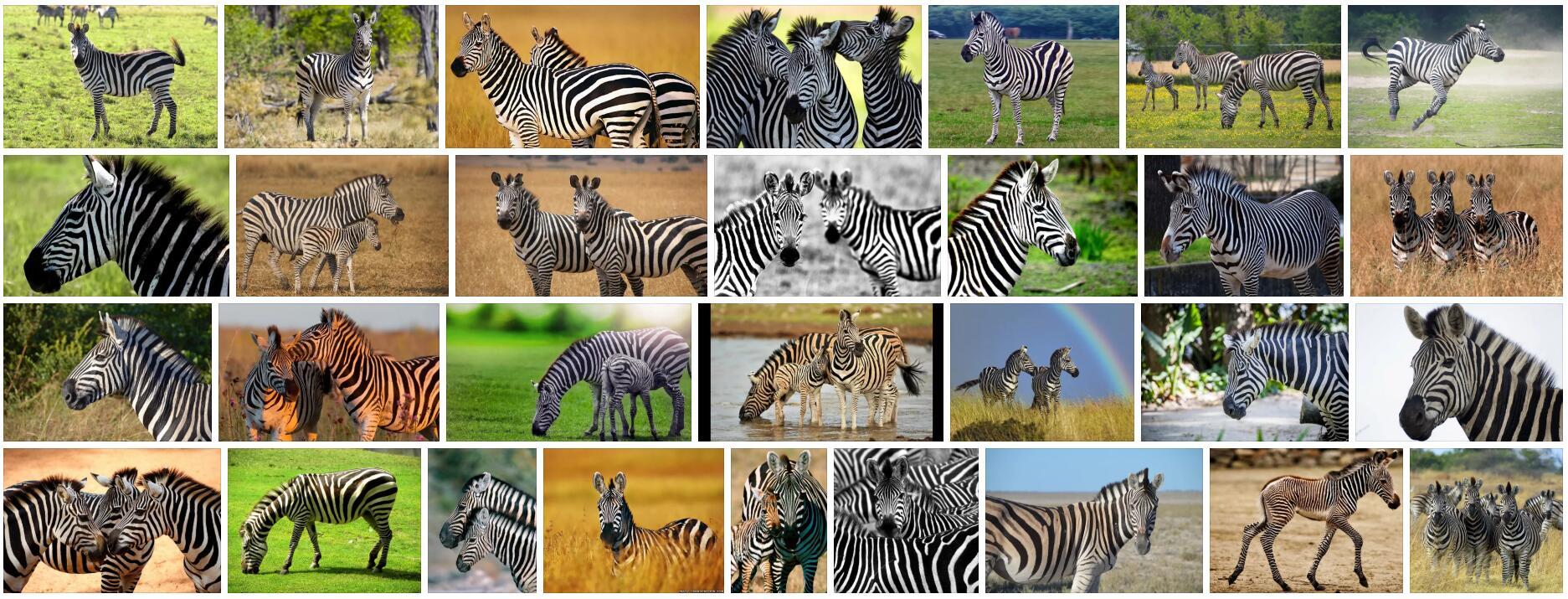 What is Zebra